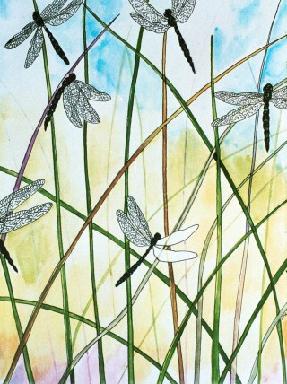 greeting card by Nan Bowles, dragonfly